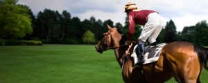 Brown horse racing in a green field with a jockey with a maroon jersey on