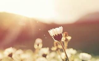 Soft golden sunlight over flowers in a field